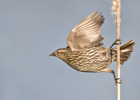 Bird, Animal, Feather, Wing, Perched, Wildlife, Flight