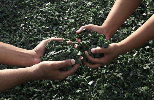 Hands, Working Together, Teamwork, Green