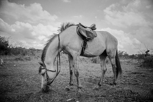 Horse, Mammal, People, Riding, Adult, Two, Dust