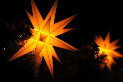 Poinsettia, Christmas, Star, Christmas Decor