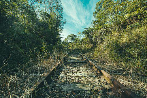 Railroad Tracks, Jungle, Overgrown, Trees, Forest, Wild