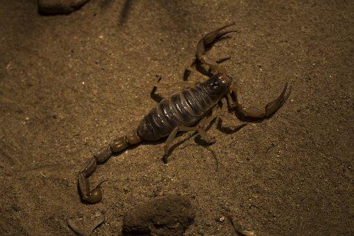Arachnids And Insects, Desert, Skeleton, Reptile, Skull
