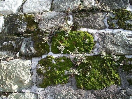 Moss, Hornworts, Liverworts, Lichen, Stone Wall