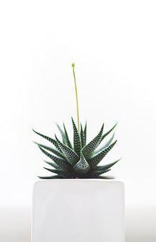 Plant, Succulent, Isolated, Nature, Health, Detail