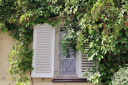 Window, Ivy, Wine Partner, Wall, Facade, Climber