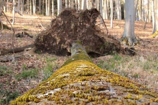 Log, Moss, Nature, Trees, Forest, Landscape, Autumn