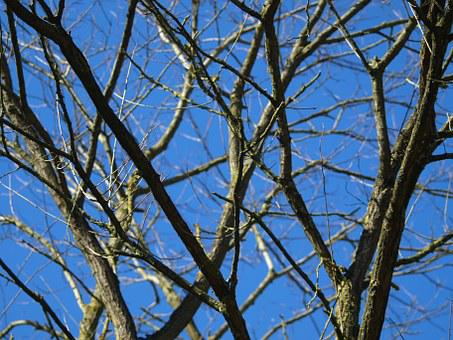Tree, Dead Plant, Old, Sky, Branches, Wood, Waldsterben