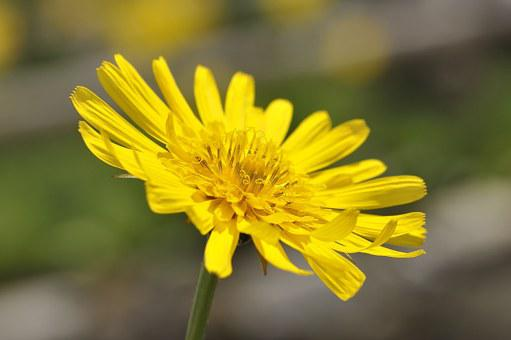 Meadows Dubius, Flower, Pointed Flower, Plant