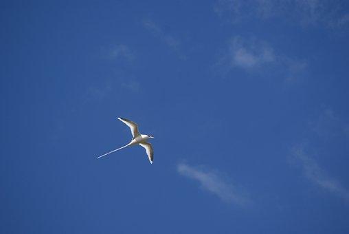 Bird, Paille-en-queues, Endemic, Sky, Blue, Nature