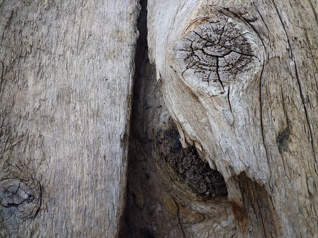 Tree, Old, Log, Wood, Gnarled, Dead Plant, Nature
