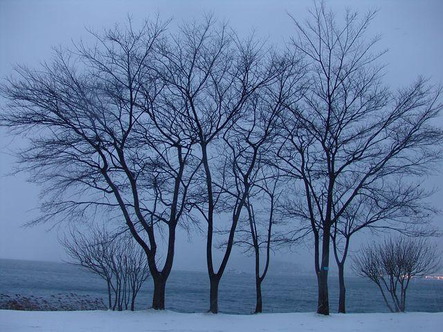 Winter, Wood, Snow, Lake, Nature, Loneliness, Eggplant