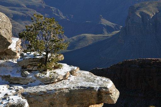 Grand Canyon, Arizona, Gorge, Winter, Tree, Ledge, Snow