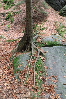Tree, Root, Overgrown, Nature, Trees, Bark, Tree Root