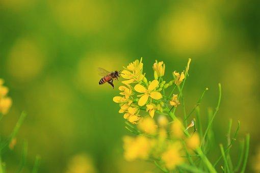 Bee, Oil Menu, Quentin Chong