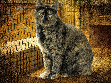 Cat, Reflexive, Animal, Nature, Captivity, Staring