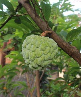 Cherimoya, Fruit, Food, Plant