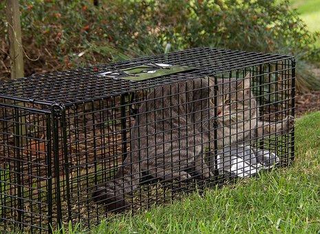 Trap, Cat, Cat Trap, Feral, Wild, Control, Pest