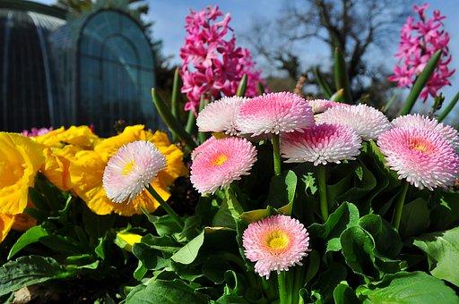Plant, Flower, Pink, Flowers, Pink Flower, Spring