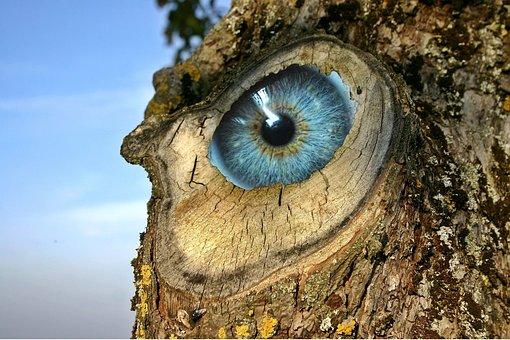 Eye, Log, Incidence, Unreal, Strange