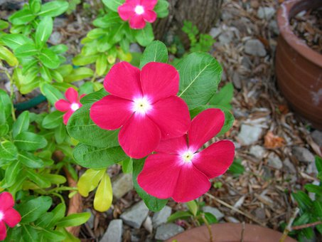 Pink, Pink Flower, Pink Flowers, Summer, Summer Flowers