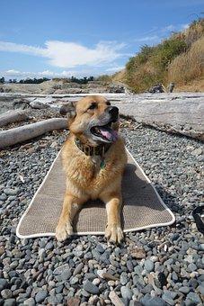 Dog, Yoga, Mat, Ocean, Victoria, Bc, Rocks