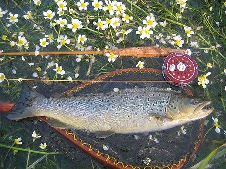 Fish, Grayling, Fishing, River, Catch, Freshwater