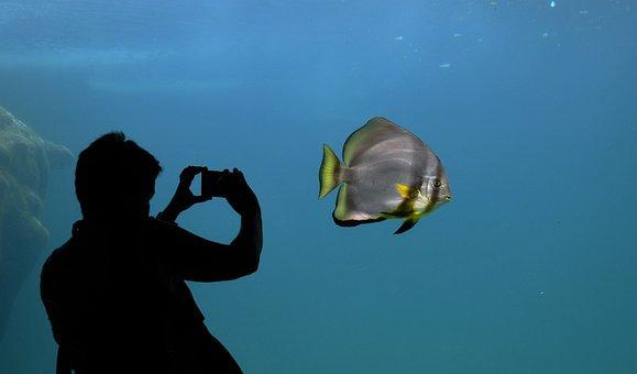 Silhouette, Bat Fish, Aquarium, Contrast, Batfish