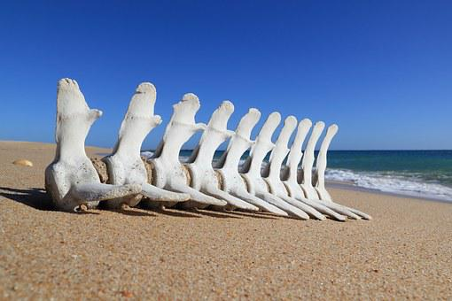 Portugal, Faro, Beach, Bone, Fish