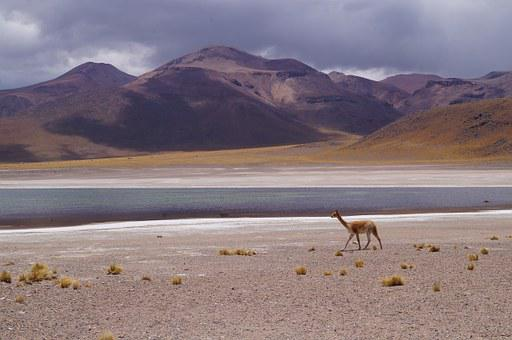 Gaps, Highlands, Vicuña