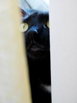 Cat, Let Me In, Cute, Black, Domestic, Furry, Green