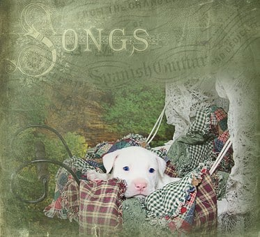Puppy, Cute, White, Pit Bull, Pitbull, Lullaby, Songs