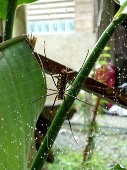 Spider, Spider Hex, Spider Web, Quentin Chong