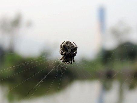 Spider, Spider Web, Spider Hex, Quentin Chong