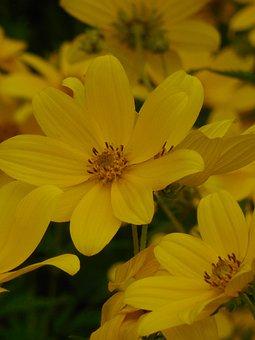 Wildflower, Sunflower, Nature, Flower, Bloom, Blossom