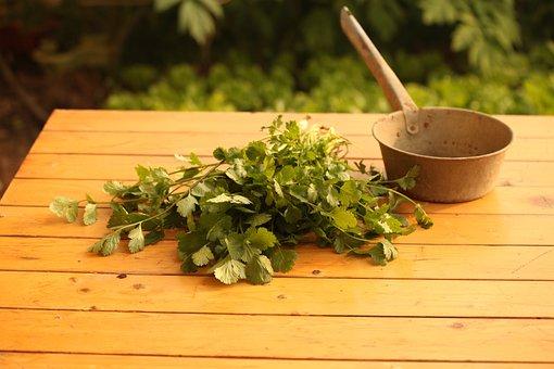 Vegetable, Coriander, Agriculture, Herb, Fresh