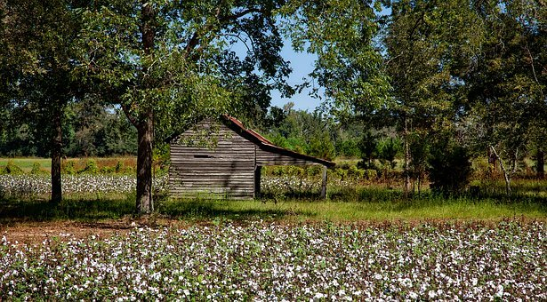 Alabama, Farm, Cotton, Agriculture, Field, Barn, Shed