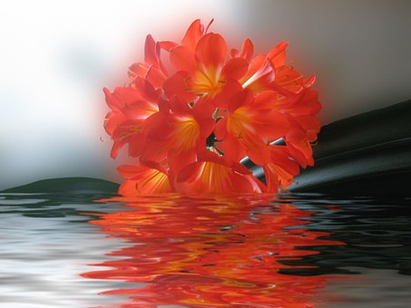 Clivia, Flower, Red, Bright, Real