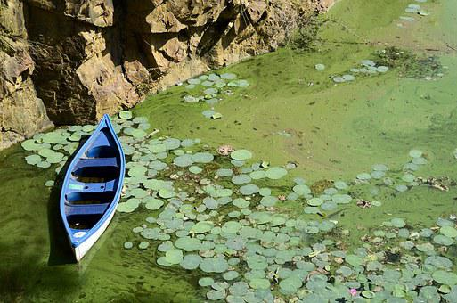 Boat, Blue, Green, Water, Pond Water, Lake