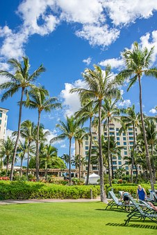 Oahu, Ko Olina, Hawaii, Palm Trees, Beach, Landscape