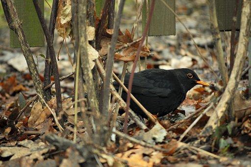 Autumn, Black, Kos, Black Bird, Bird, Castle