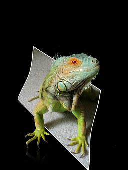 Iguana, Reptile, Lizard, Green, Blue, Horizontal