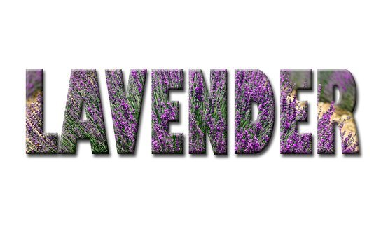 Lavender, Text, Word, Fields, Flower, Natural, Rustic
