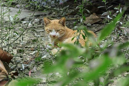 Cat, Courtyard, Grove, Nap, Rest, Apology, Afternoon