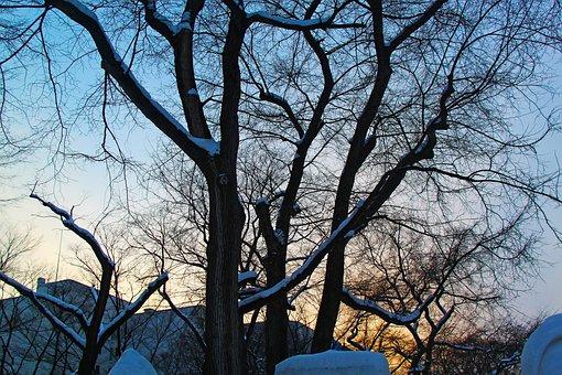 Sunset, Beautiful, Cold, Winter, Evening, Park