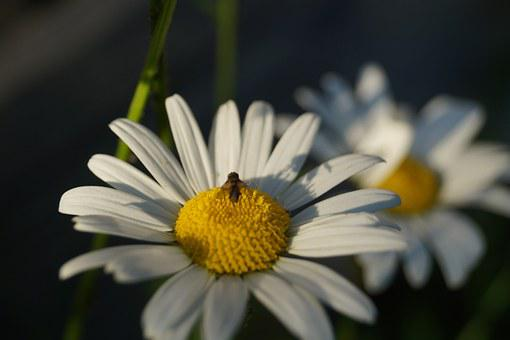 Keywords Fotomontáž, Insect, Flower, Fly, Nature Flower