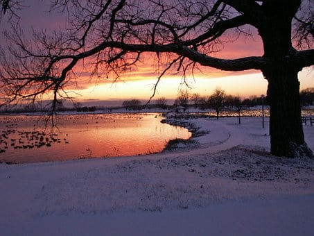 Winter, Snowy, Trees, Woods, Water, Sunset, Evenings