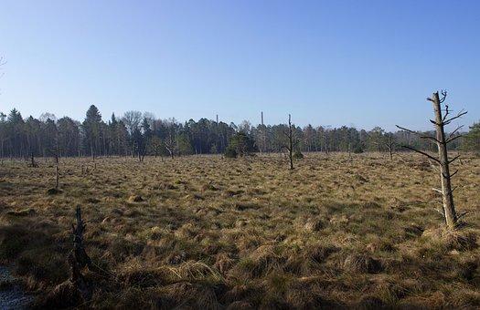 Wurzacher Ried, Nature Reserve, Moor, Lan, Moorland