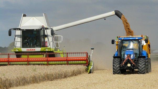 Harvest, Grain, Combine, Arable Farming, Harvest Time