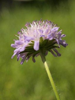Meadow, Flower, Dandelion, Healthy, Salad, Ingredient