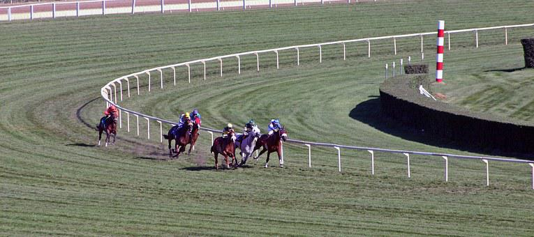 Animal, Horse, Racing, Race, Color, Competition, Farm